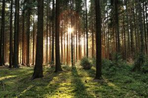 Lees meer over het artikel Zomaar onverwachte seks in het bos