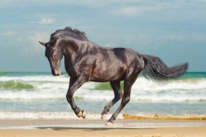 Lees meer over het artikel Een dagje met mijn paard naar het strand.